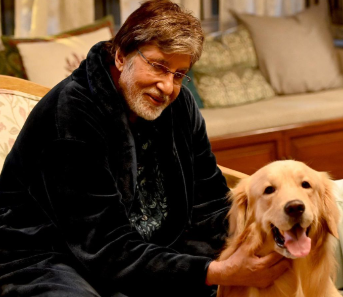 Amitabh bachchan playing with his pet